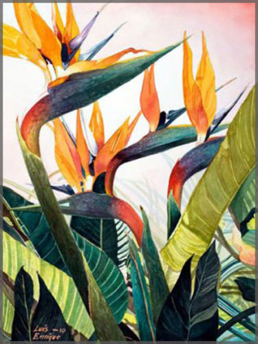 Watercolour on paper by artist Luis Enrique of Ajijic, Mexico, painting of Birds of Paradise blossums.