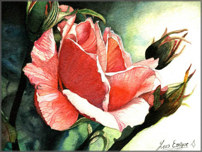 Watercolour painting on paper by artist Luis Enrique of Ajijic, Mexico of a pink rose