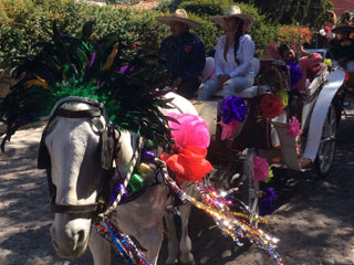 Horse decorated with feathers and flowers for the Mardi Gras parade in Ajijic, Mexico.